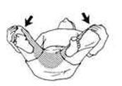 http://www.pozvonochnik.org//images/muscles/17srthdmhgc.jpg