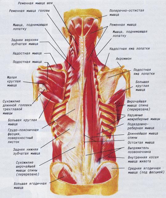 остеохондроз шейного отдела головокружение отзывы